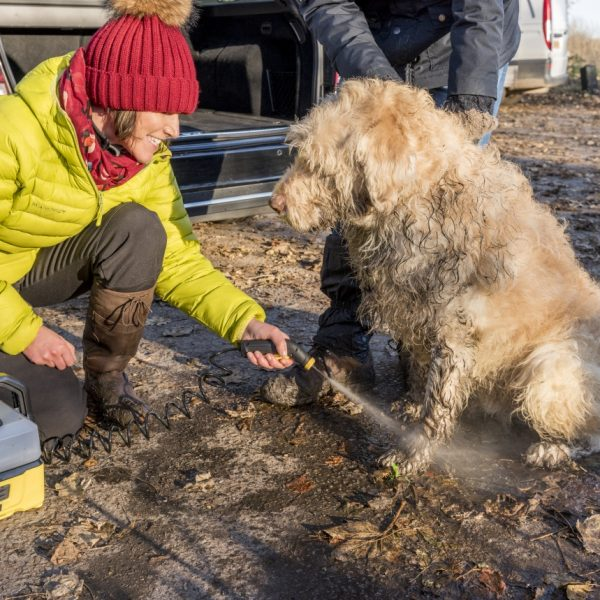 cleaning_a_dog